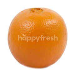 Navel Orange (8 Pieces)