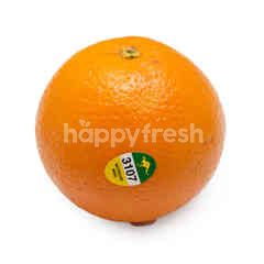 Australia Navel Orange
