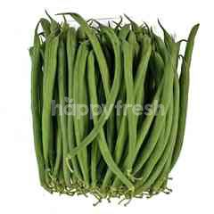 Japanese Baby Green Bean