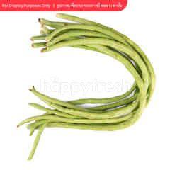 Tesco Yardlong Bean