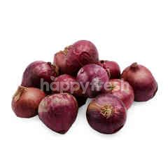 Red Rose Shallot Onion