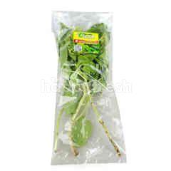 PPK Organic Basil