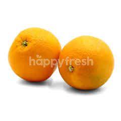 Navel Orange (XL)