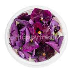 Edible Flower (Torenia)
