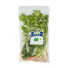 Natural & Premium Food Organic Coriander