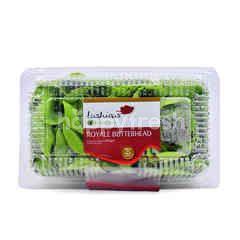 Lushious Salanova Royale Butterhead Lettuce