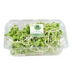 Wb Organic Sunflower Sprouts