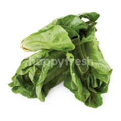 Veggie Organic Baby Cos