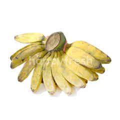 Medan Kepok Banana