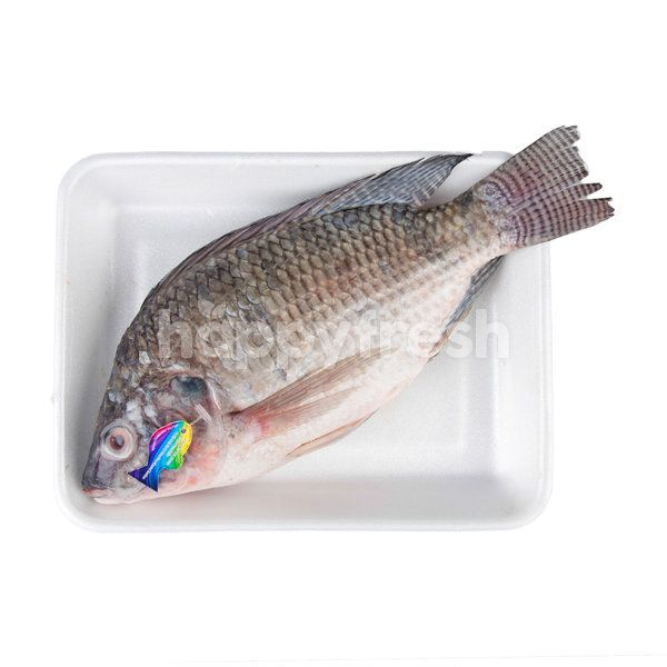 Big C Hygienic Nile Tilapia Fish