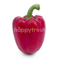 Hydroponic Red Pepper