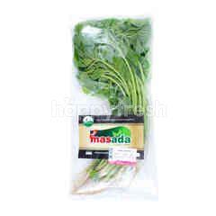 Masada Organic Green Spinach