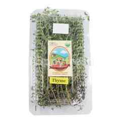 Living Organic Daun Thyme Organik