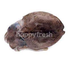 Cuttlefish (Sotong Panjang)