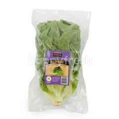 Fresharvest Mini Romaine Lettuce