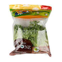 Veggie Organic Frille Iceberg