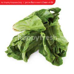 Wb Organic Baby cos