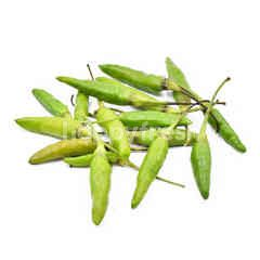 Bird's Eye Green Chilli (Cili Padi)