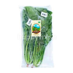 Living Organic Organic Horenso