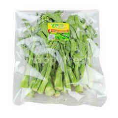 PPK Organic Hongkong Kale