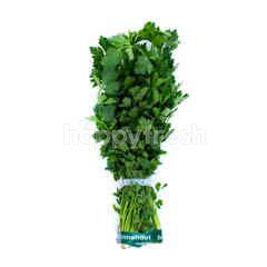 Small Celery