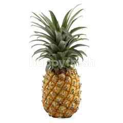 Tropical Golden Pineapple