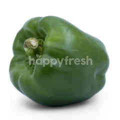 Hydroponic Green Pepper