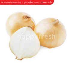 Gourmet Market Onion