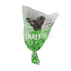 Hussey & Co Australia Red Kale