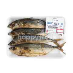 Big C Short Bodied Mackerel Fish