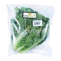 Cambo Green Organik Salada Romaine