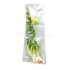 PPK Organic Spring Onion
