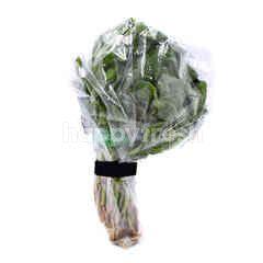 Baby Spinach (Anak Bayam)