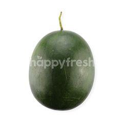 UM Red Watermelon