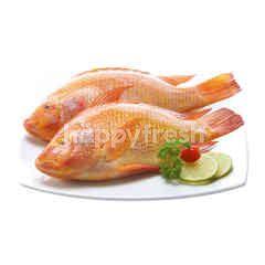 เทสโก้ ปลาทับทิมจัมโบ้