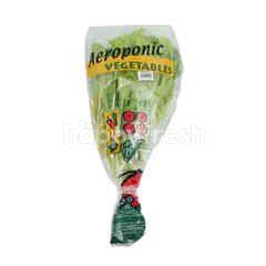 Amazing Farm Selada Keriting Aeroponik