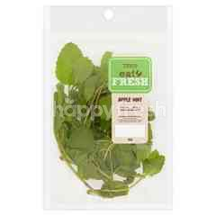 EAT FRESH Apple Mint Leaves