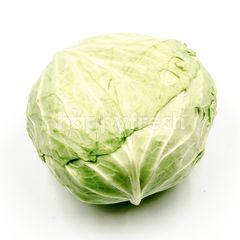 Round Cabbage