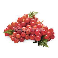Big C Imported Red Grapes (DIP)