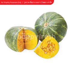 Royal Project Japanese Pumpkin