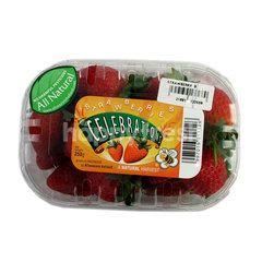 Celebration Strawberry