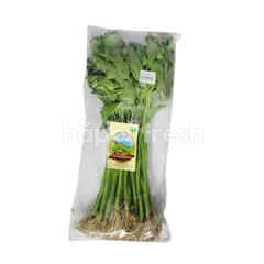 Organic Water Spinach