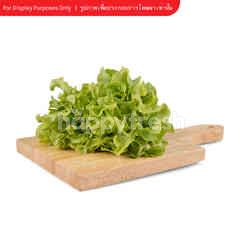 Tesco Green Oak Salad