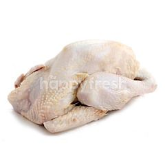 EF Ayam Pejantan