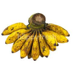 Raja Sereh Banana