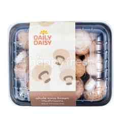 Daily Daisy Swiss Brown Mushroom