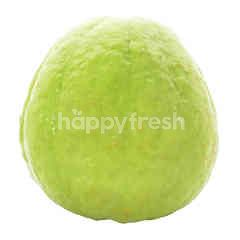 King Guava