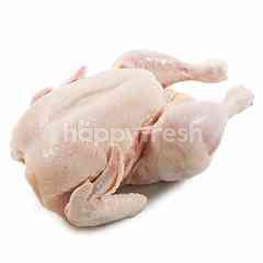EF Fresh Broiler Chicken Fresh