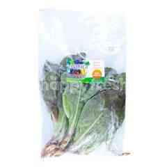 Enatura Romaine Lettuce