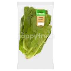 EAT FRESH Romaine Lettuce
